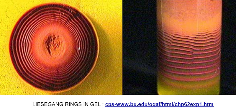 Liesegang rings in gel